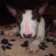 Lost Siberian Husky - last post by louisebt