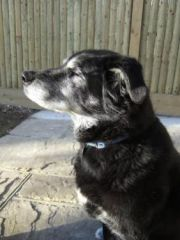 Jack.My ex foster rehomed with my sister.Now 14!